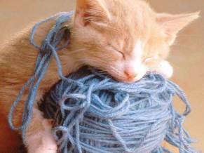 gato-ovillo-de-lana